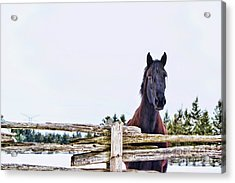 Acrylic Print featuring the photograph The Watcher 2 by Traci Cottingham