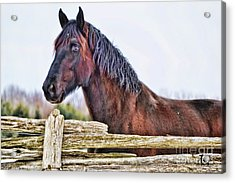 Acrylic Print featuring the photograph The Watcher by Traci Cottingham