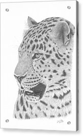 The Watchful Leopard Acrylic Print