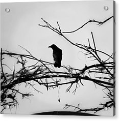 The Watchman Acrylic Print by Vail Joy