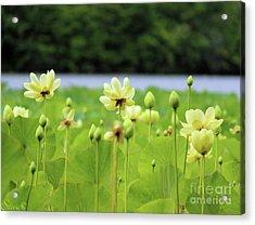 The Water Fields  Acrylic Print