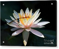 The Water Lily And The Dragonfly Acrylic Print by Sabrina L Ryan