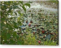The Water Lily Pond Acrylic Print by Molly Dean