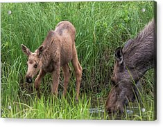 The Watering Hole Acrylic Print