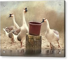 Acrylic Print featuring the photograph The Watering Hole by Robin-Lee Vieira