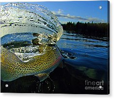 The Way Of The Trout Acrylic Print