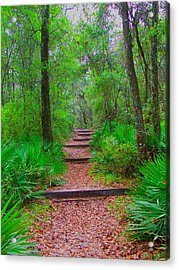 The Way Up Acrylic Print by Judy  Waller
