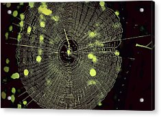 The Web Acrylic Print by Jill Tennison