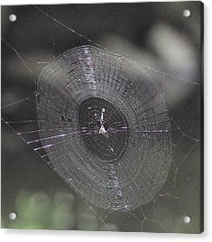 The Web Acrylic Print