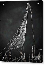 The Web Acrylic Print