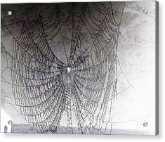 The Web We Weave Acrylic Print by Margaret Hamilton