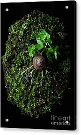 The Weird Spring Acrylic Print by Masako Metz