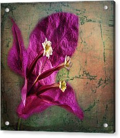 Acrylic Print featuring the photograph The Well Dressed Bougainvillea by Bellesouth Studio