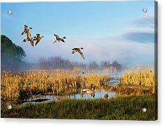The Wetlands Crop Acrylic Print