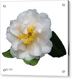 The White Flower Acrylic Print by Judy  Waller