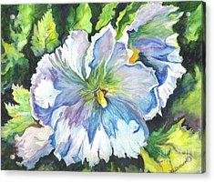 The White Hibiscus In Early Morning Light Acrylic Print by Carol Wisniewski
