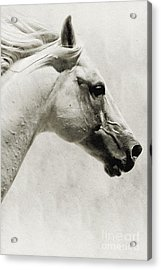 The White Horse IIi - Art Print Acrylic Print