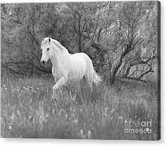 The White Horse In The Forest Acrylic Print by Carol Walker
