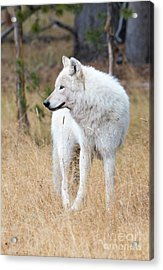 The White Lady Acrylic Print