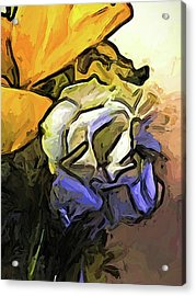 The White Rose And The Yellow Petals Acrylic Print