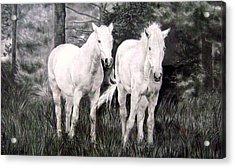 The White Stallions Acrylic Print