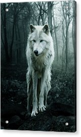 The White Wolf Acrylic Print by Julie L Hoddinott