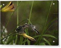 The Whole Bug 8 Acrylic Print by E Mac MacKay