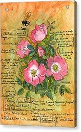 The Wild Rose Acrylic Print