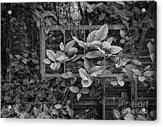 The Window Without A View Acrylic Print