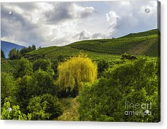 the wineyards of Loc Acrylic Print by Michelle Meenawong