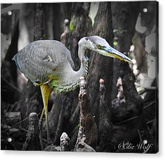 The Winged Stalker Acrylic Print