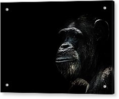 The Wise Acrylic Print