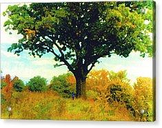 The Witness Tree Acrylic Print