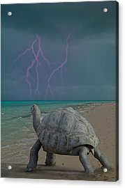 The Wonders Of Mother Nature Acrylic Print by Betsy Knapp