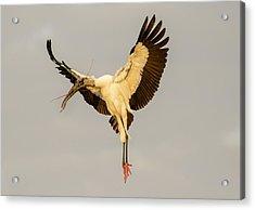 The Wood Stork Angel Acrylic Print