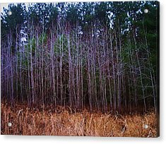 The Woods 3 Acrylic Print
