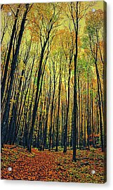 Acrylic Print featuring the photograph The Woods In The North by Michelle Calkins