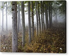 The Woods Acrylic Print by Rebecca Cozart