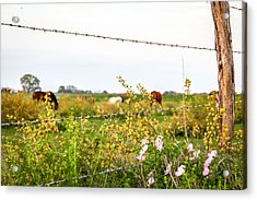 Acrylic Print featuring the photograph The Wrong Side Of The Fence by Melinda Ledsome