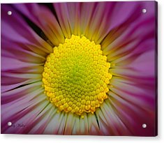 The Yellow Center Acrylic Print by Judy  Waller