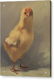 The Yellow Chick Acrylic Print by Alecia Underhill