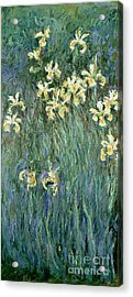 The Yellow Irises Acrylic Print by Claude Monet
