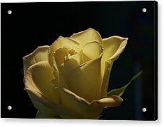 Acrylic Print featuring the photograph The Yellow Rose by Sheryl Thomas
