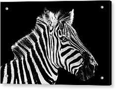 The Zebra Stripes Acrylic Print