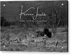 Acrylic Print featuring the photograph The Zebra Tree by Karen Lewis