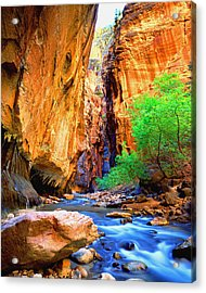 The Zion Narrows Acrylic Print