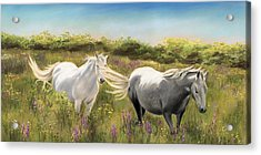 Thelma And Louise Connemara Ponies Acrylic Print by Vanda Luddy