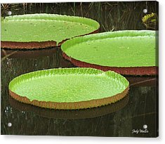 There Are Three Acrylic Print by Judy  Waller