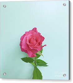Acrylic Print featuring the photograph There Is Simply The Rose by Cindy Garber Iverson