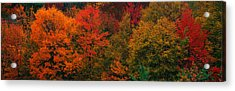 These Shows The Autumn Colors Acrylic Print by Panoramic Images
